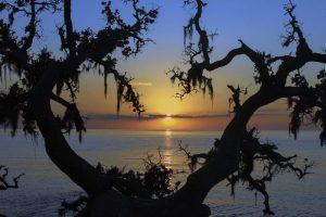 Outer Banks Coastal Seashore - Outer Banks North Carolina